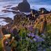 Punta de Lobos - Pichilemu by felipe vivanco