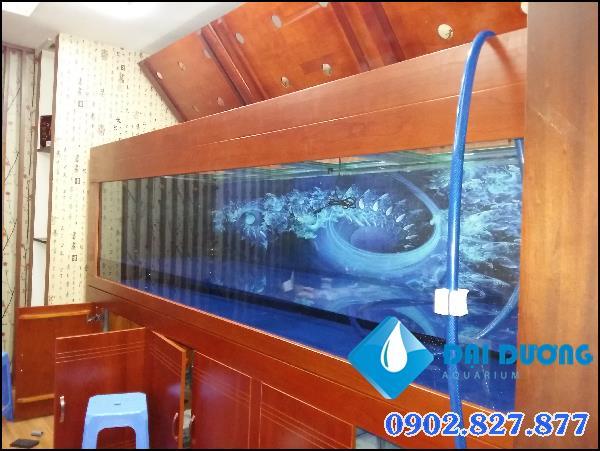 hồ cá rồng dài 3,2m tại quận 8