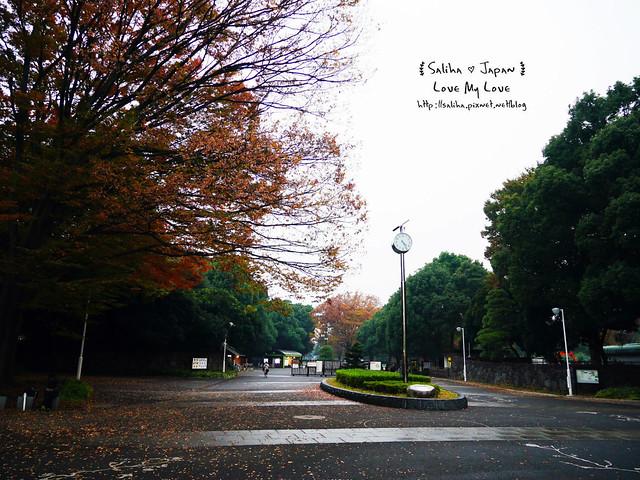 日本東京景點澀谷區代代木公園賞楓葉 (25)