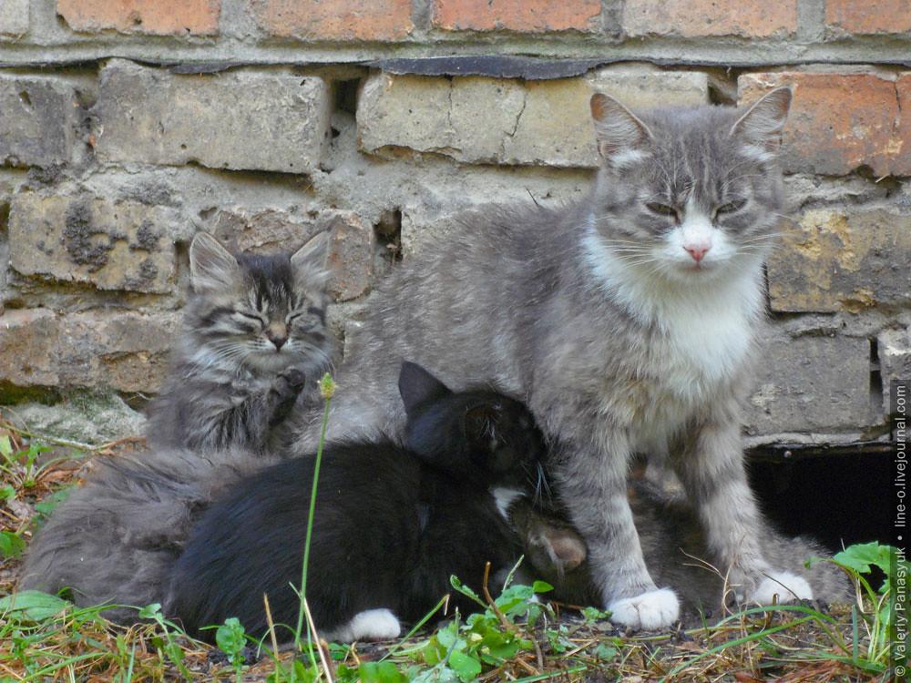 20150908_novik_cat_001