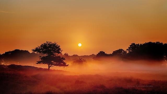 Foggy Dunes Gasteren Netherlands