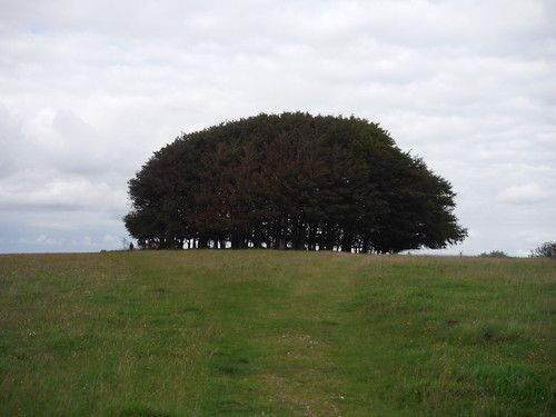 South Wiltshire's Highest Point: Beech Clump, Win Green Hill