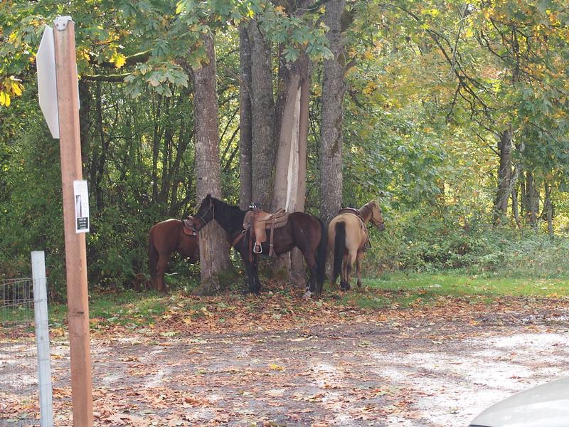 Horses in Carbonado