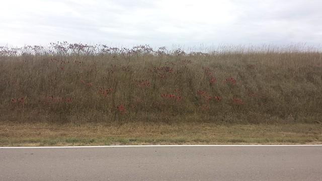 Nebraska countryside vegetation