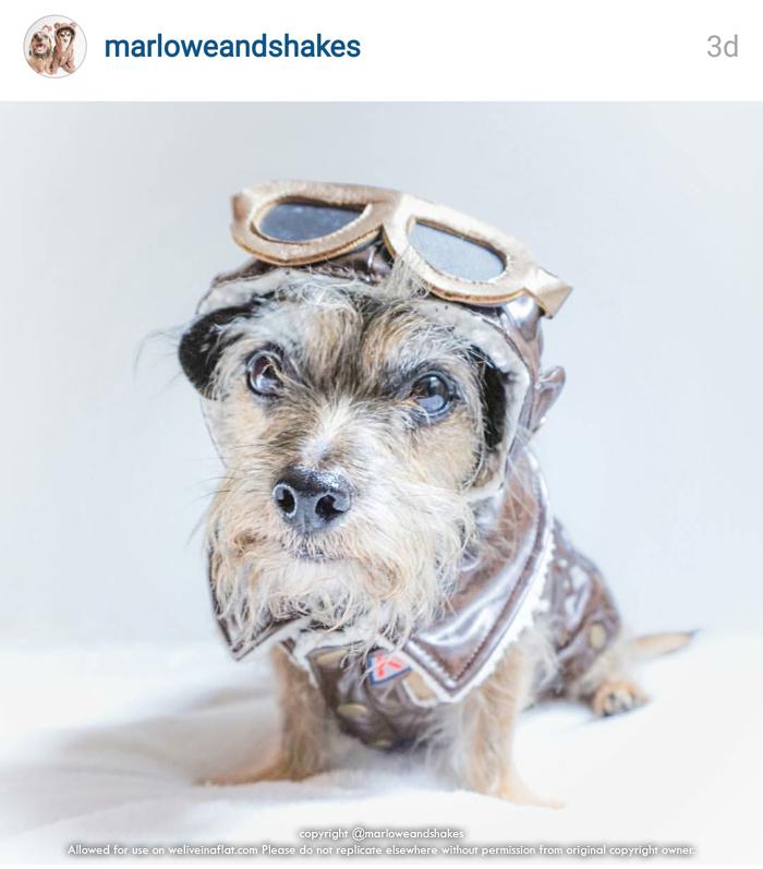 pilot-halloween-costume-dog