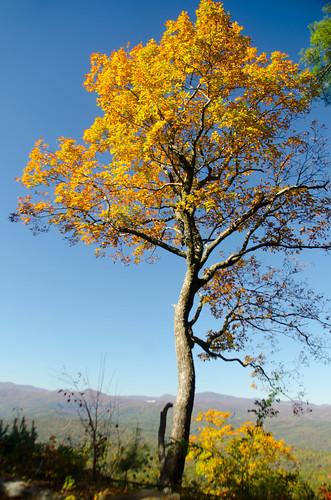 sunset fallleaves us unitedstates southcarolina autumncolors dirtroad jumpoffrock canebrake