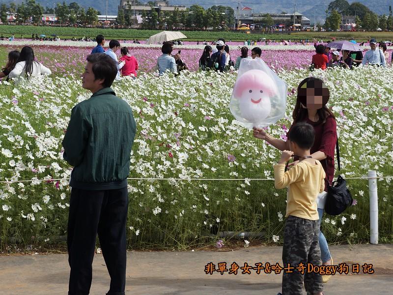2014臺中新社花海36