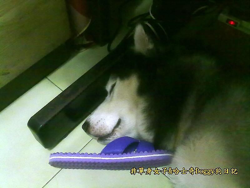 Doggy穿兒童襪02
