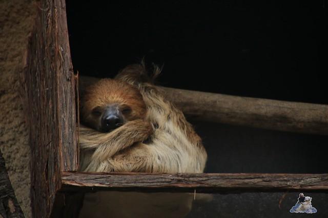 Eisbär Fiete im Zoo Rostock 13.12.2015  270