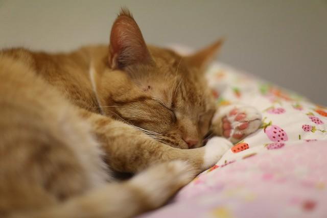 Bhakti snooze