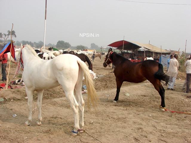 Animal Fair: Horse Fair: black and white pair