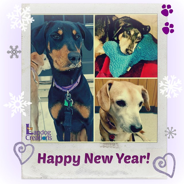 Lapdog Creations wishes you a Happy New Year - Here's to 2016! #adoptdontshop