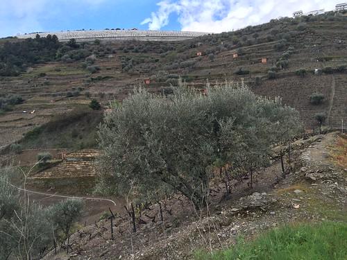 2016-04-16-Vallee-du-Douro-110