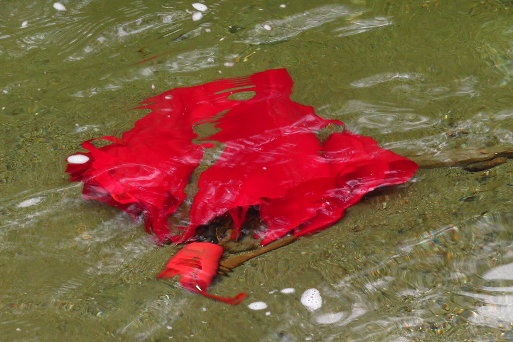 Red Umbrella Drowning