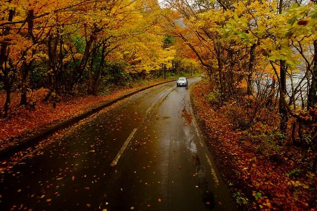 Autumns color