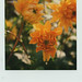 Popping Yellow by Joep Polaroid Photography