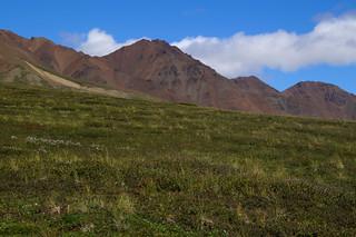 246 Uitzicht Denali NP