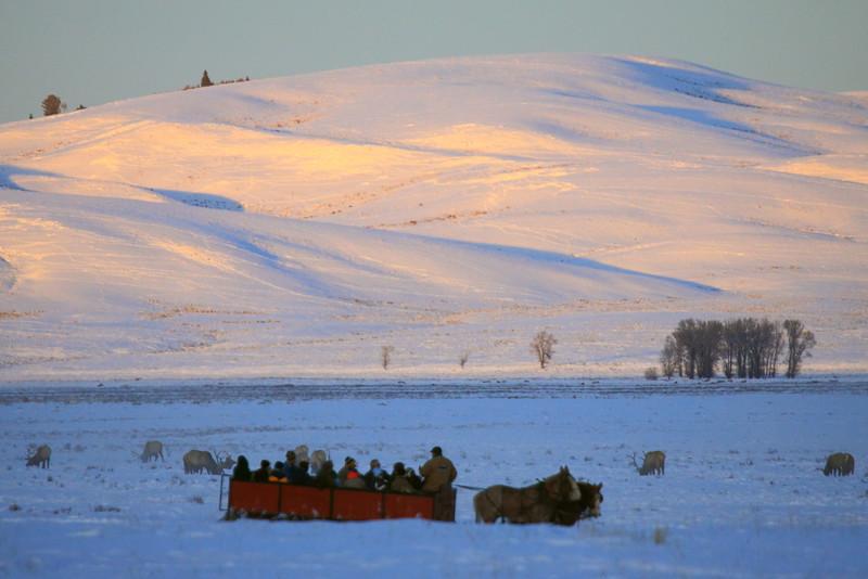 IMG_4403 Sleigh Ride, National Elk Refuge