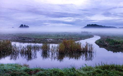 trees mist water grass fog clouds landscape canal canals polder vlaardingen groundfog otherkeywords nederlandvandaag