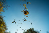 20151101_14_Thrown Up Falling Leaves In Motion