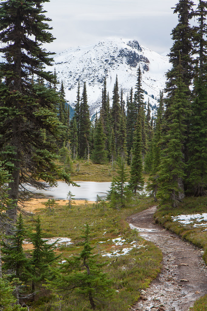 Garibaldi Lake Trail, Taylor Meadows