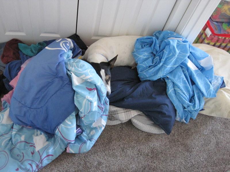 Toby Laundry