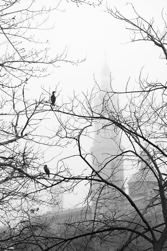 Pajaricos en la niebla