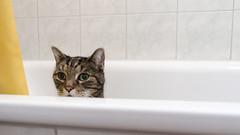 Cat sitting in bathtub