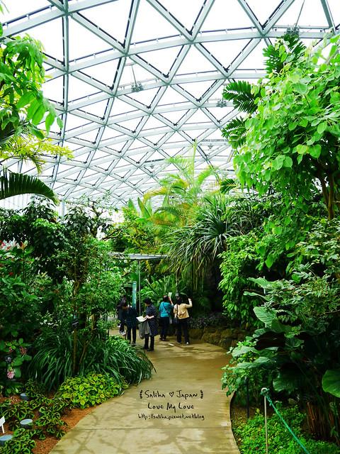 日本東京景點新宿御苑溫室植物 (16)