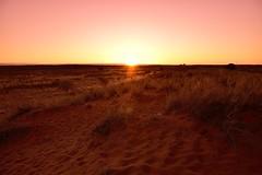 Kalahari landscape, Kalahari, Northern Cape, South Africa