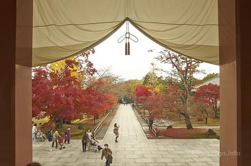 【写真】2014 紅葉 : 智積院/2020-09-07/IMGP7554