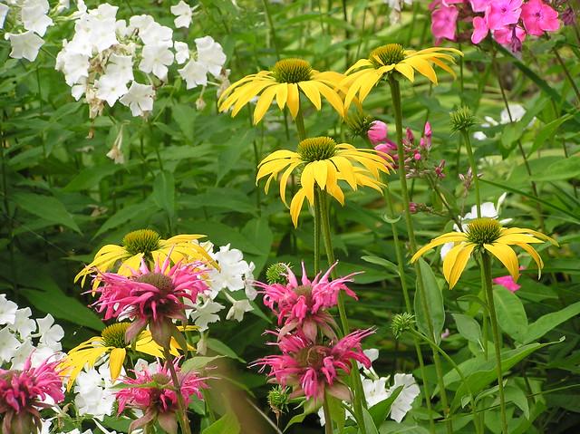 Echinacea 'Leilani' & Monarda