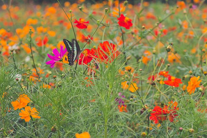 Hama-rikyu-Gardens-4