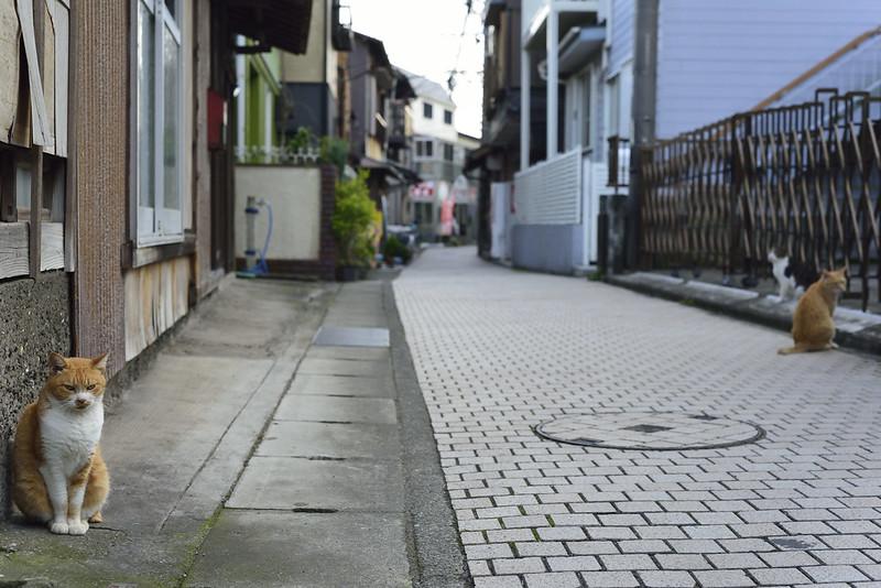 江ノ島ねこさんぽ