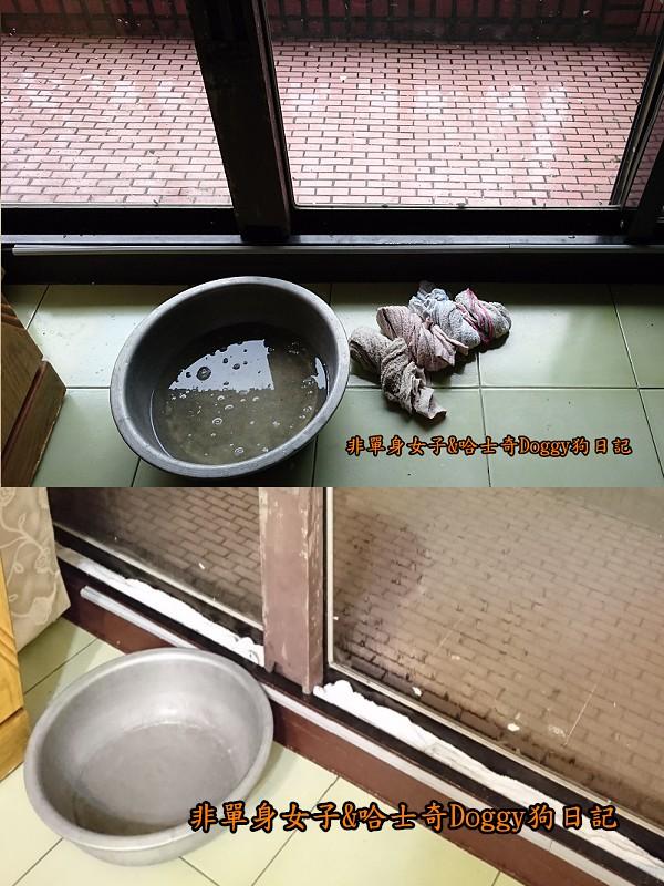 Doggy颱風03