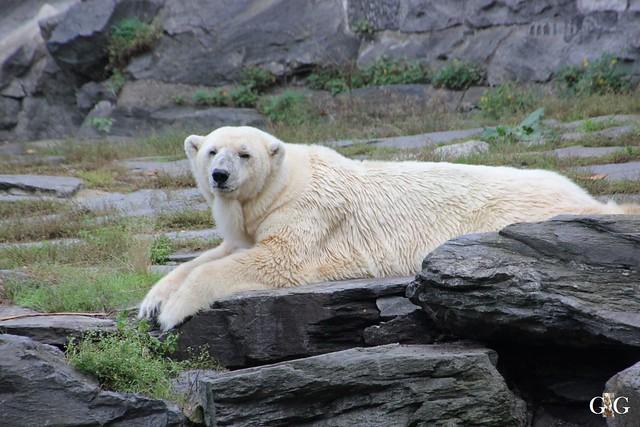 Sonntags-Besuch im Tierpark Friedrichsfelde 04.10.201591