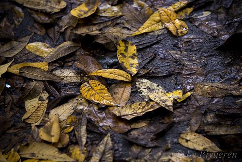 Lasciate cadere le foglie