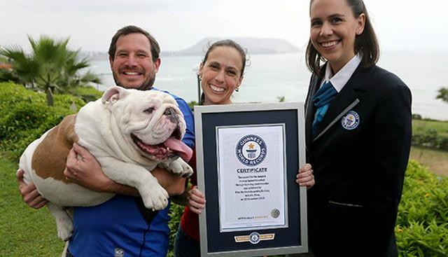 Perro peruano logra record Guinness