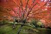 Tokyo Life_Autumn_32_2014