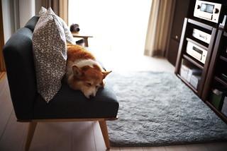 napping P.