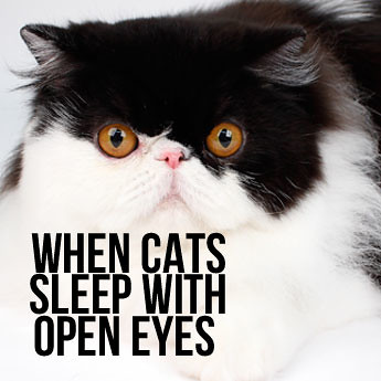 Sleeping Cat Keeps Eyes Open