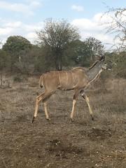 Kruger II