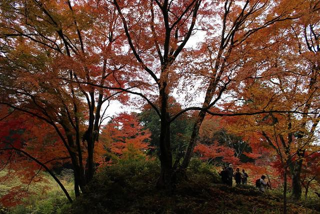 1506_紅葉シーズン, Canon EOS KISS X5, Canon EF-S 18-55mm f/3.5-5.6 IS II