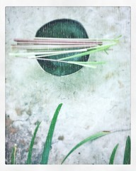 Lemongrass Japanese Tea Pottery Garden 29B99T