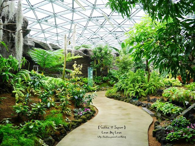 日本東京景點新宿御苑溫室植物 (6)