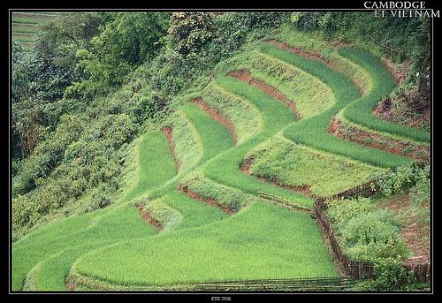 Jour 19 : 20 août 2011 : Sapa - Montagnes du Nord Vietnam