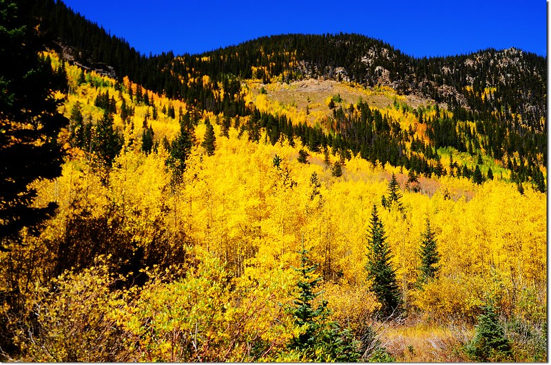 Fall colors at Guanella Pass, Colorado (26)
