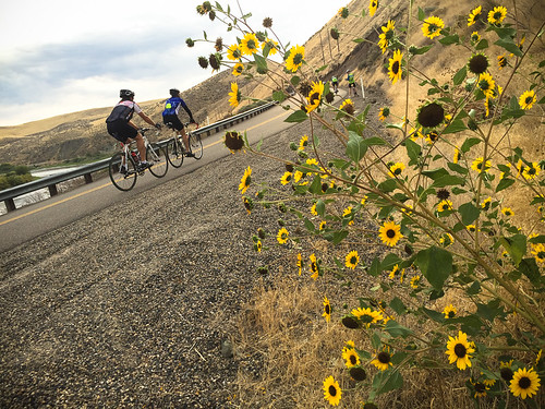 Cycle Oregon 2015 Day Two-7.jpg