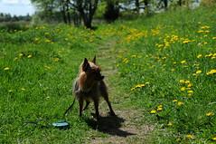 Herr Hund maj 2015
