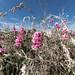 Flowers Wide